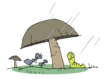 Moral Stories for Children: Why do mushrooms look like umbrellas