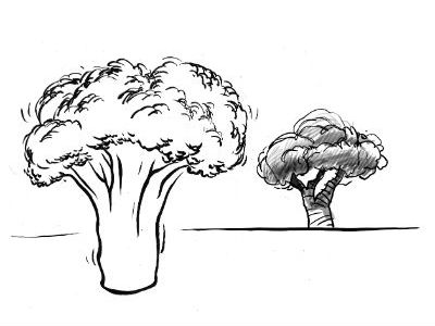 Moral Stories for Students: Why is Broccoli shaped like a tree?