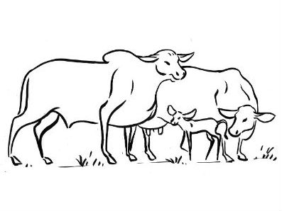 Moral Stories for Students: Why do bulls and cows have horns?