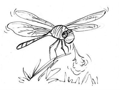 Moral Stories for Students: Why is Dragonfly named after a Dragon?