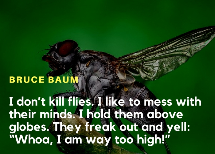Funny quote on house flies