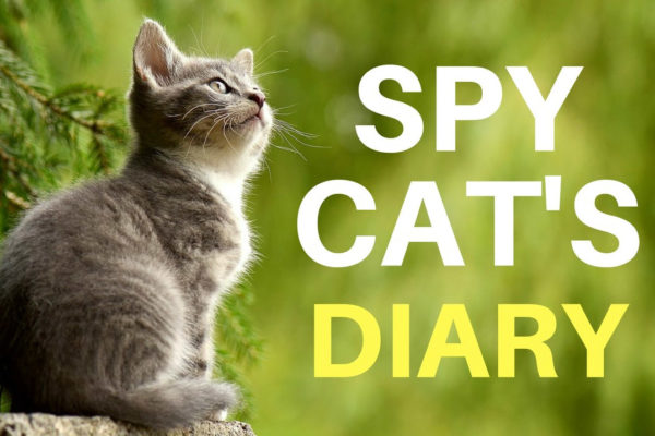 Funny diary of a Spy Cat