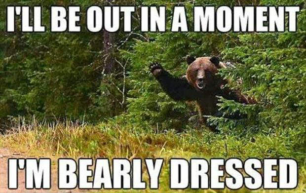 Why bears are like women